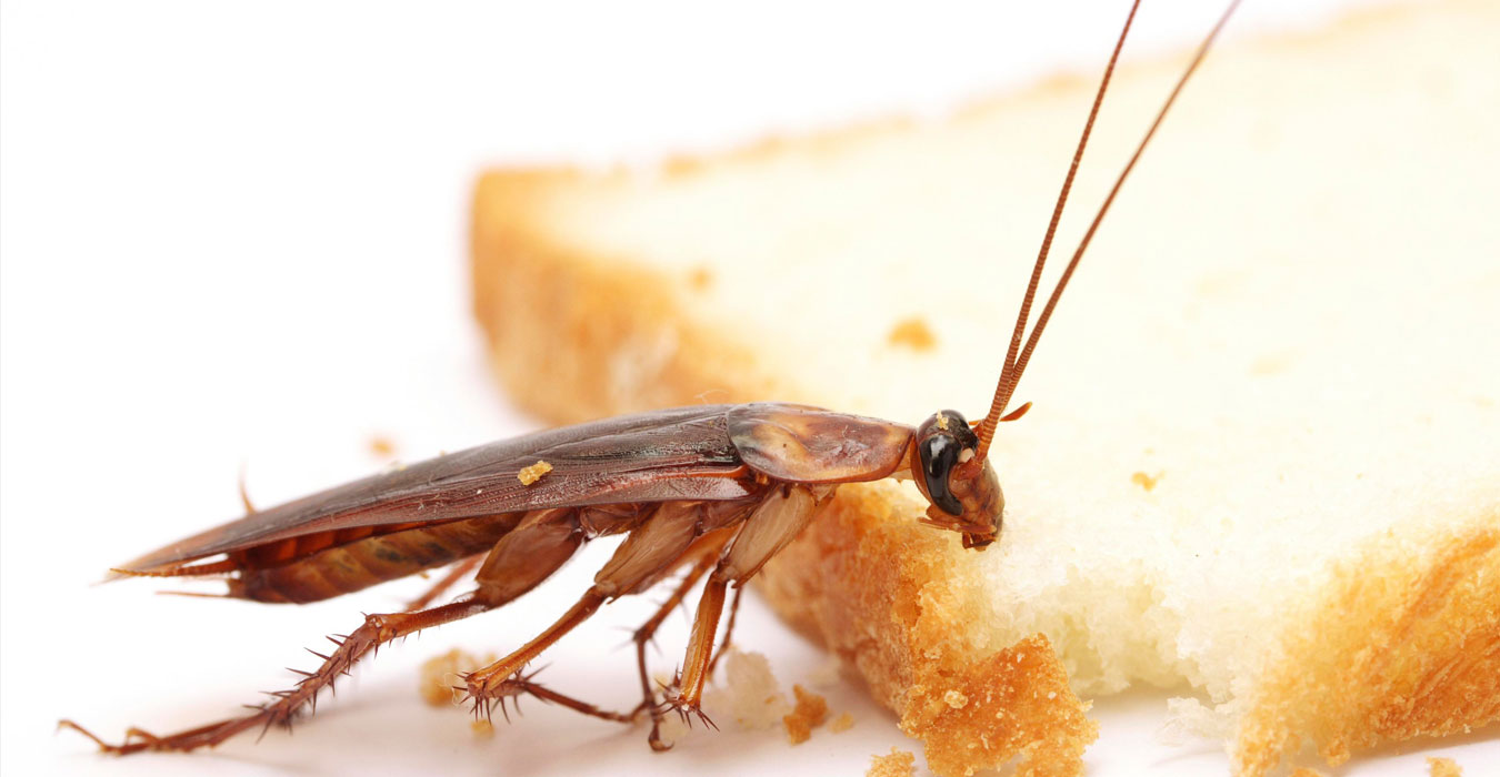Image result for cockroach control